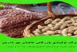 فروش بادام زمینی هندی