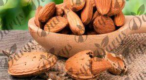 صادرات بادام مامایی